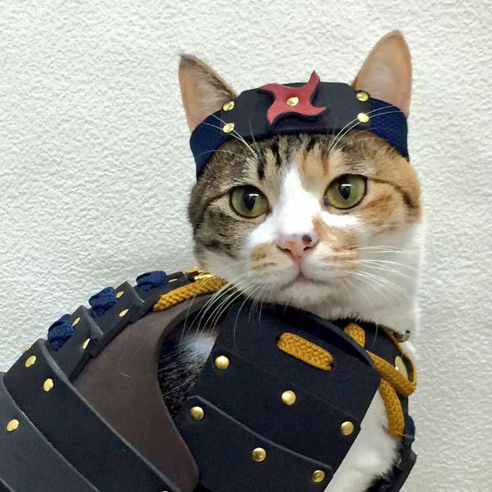 pet-dog-cat-armor-samurai-age-japan-1-w700