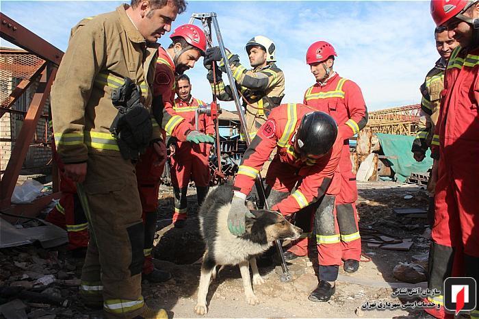 نجات سگ نگهبان از اعماق چاه