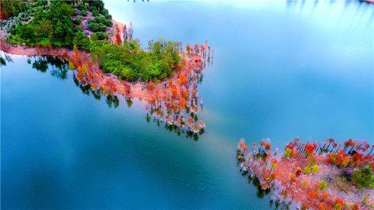 جنگل چین