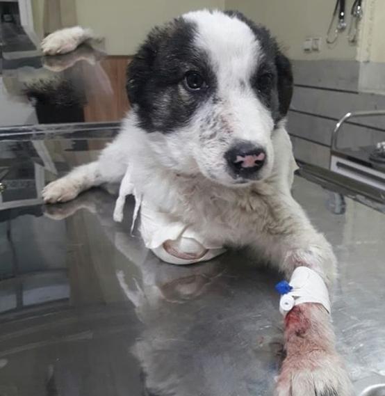 درمان سگ