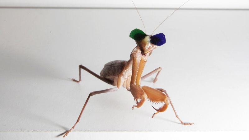 عینک سهبعدی برای بررسی بینایی ماهی مرکب