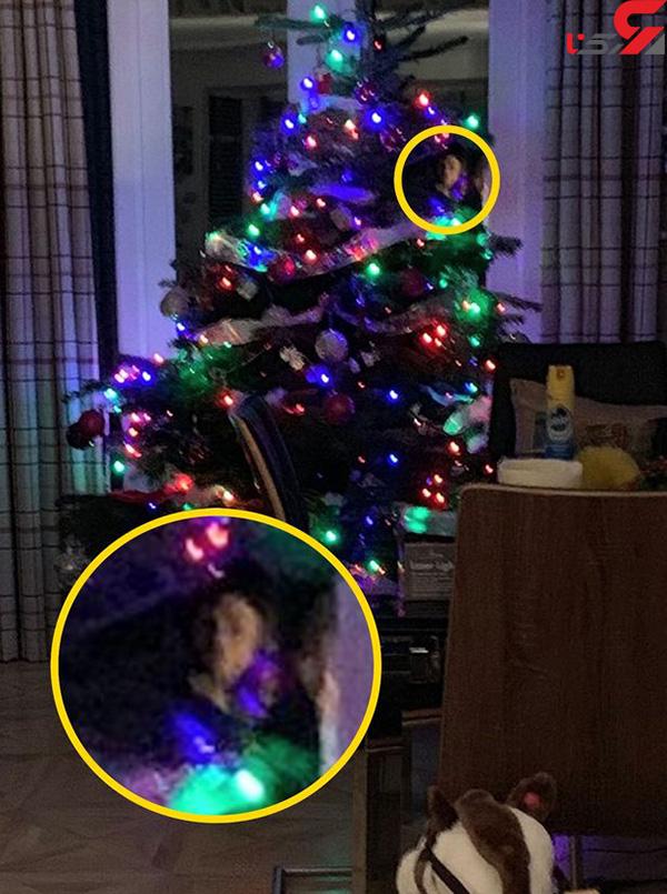 عکس روح در درخت کریسمس (1)