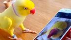 فیلمی از شگفتی های یک طوطی