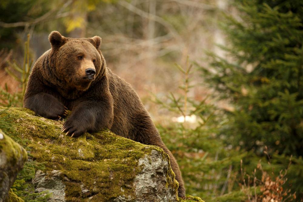 ۱۰ حیوان شگفتانگیزی که ماهها یا حتی سالها بدون غذا زنده میمانند! + تصاویر