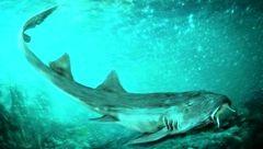 وحشت از کشف دندان های کوسه ۶۷ میلیون ساله در رودخانه