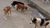 شلیک به سگ در دزفول بخاطر حمله به زن باردار در ترمینال / رییس اداره محیط زیست اذعان کرد