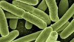 عصار های گیاهی با عفونت های باکتریایی مبارزه می کنند