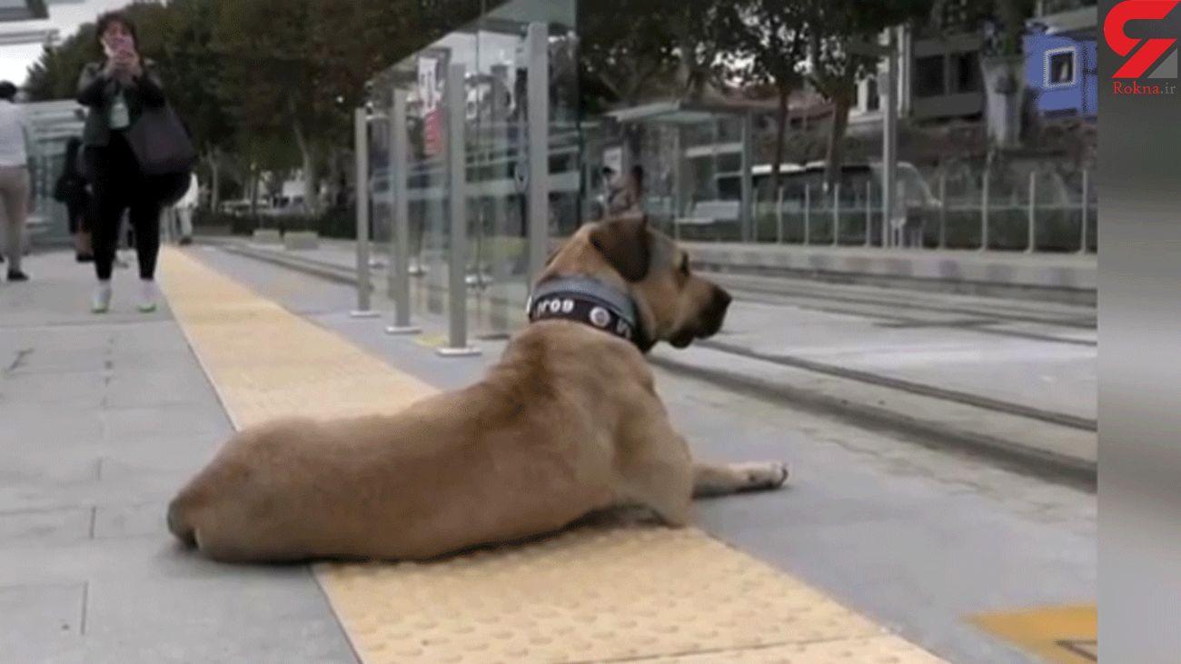 استفاده این سگ از مترو سوژه شد + فیلم