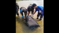 جنازه های تازه عروس و داماد را داخل چمدان جا کردند!  + عکس / تایلند