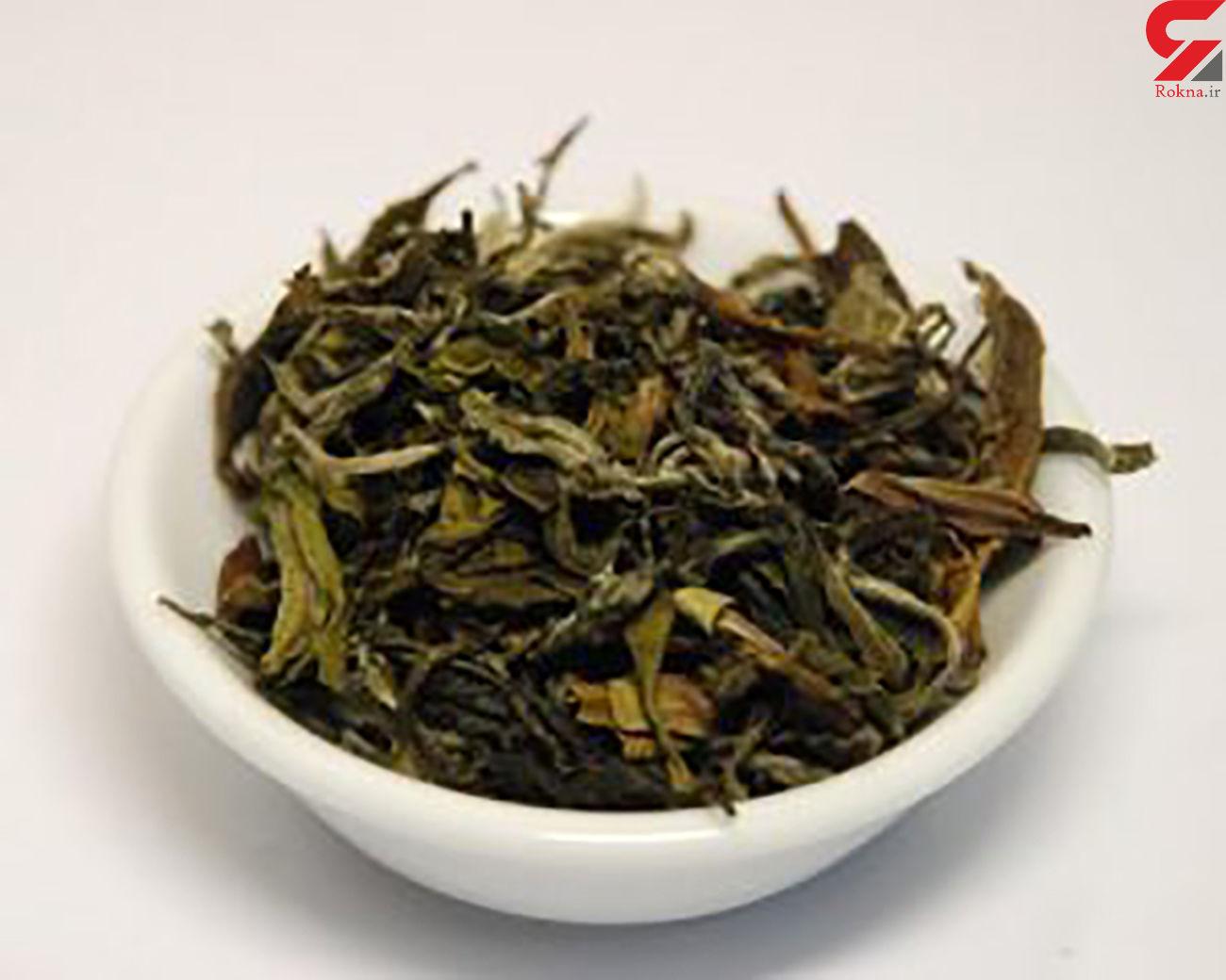 خواص چای سبز؛ از چربی سوزی تا تقویت مغز