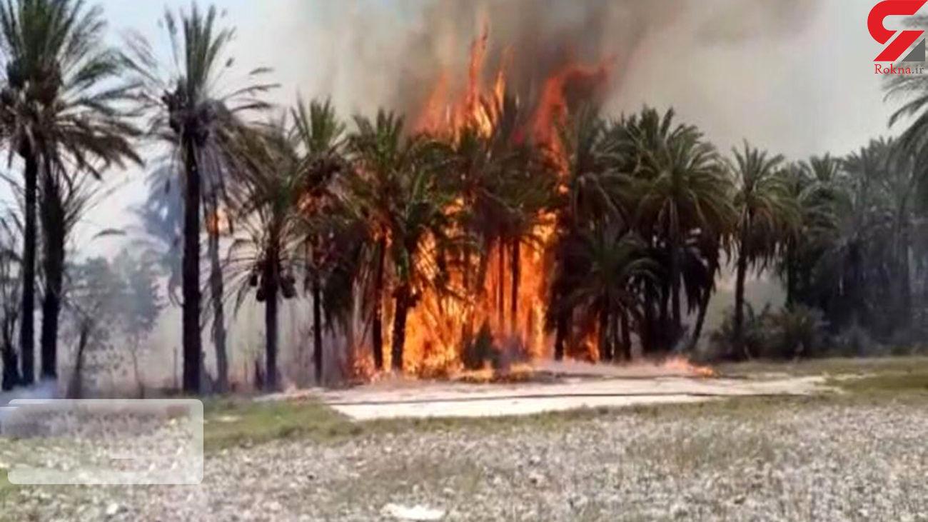 نخل های بوشهر سوخت