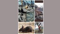 تصاویر جعلی از لاشه سوخته حیوانات در آتش سوزی ارسباران ؟