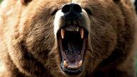 صحنههای ورود حیوانات وحشی به خانه ها + فیلم
