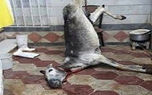 عکس وحشتناک / لاشه الاغ مرده برای ذبح در پارکینگ خانه مسکونی در تبریز !