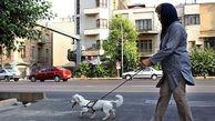 تفریحات نامتعارف لاکچری ها در لواسان/ خریدن سگ های خاص برای کارهای عجیب