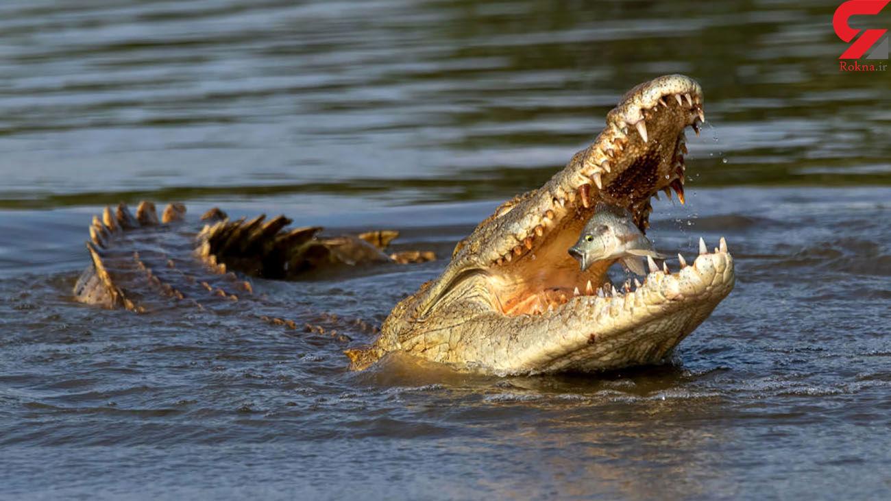 ضجه های ماهی در یک قدمی مرگ + عکس