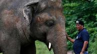 آزادی «تنهاترین فیل دنیا» پس از 35 سال