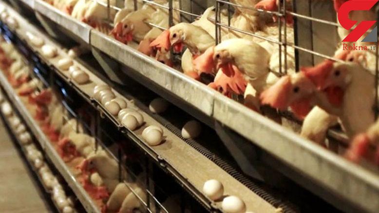 نرخ تمام شده برای مرغداران زیانده است