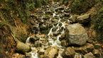 آبشاری به زیبایی یک رویا در دل جنگل با جاذبهای بکر برای گردشگری+ تصاویر