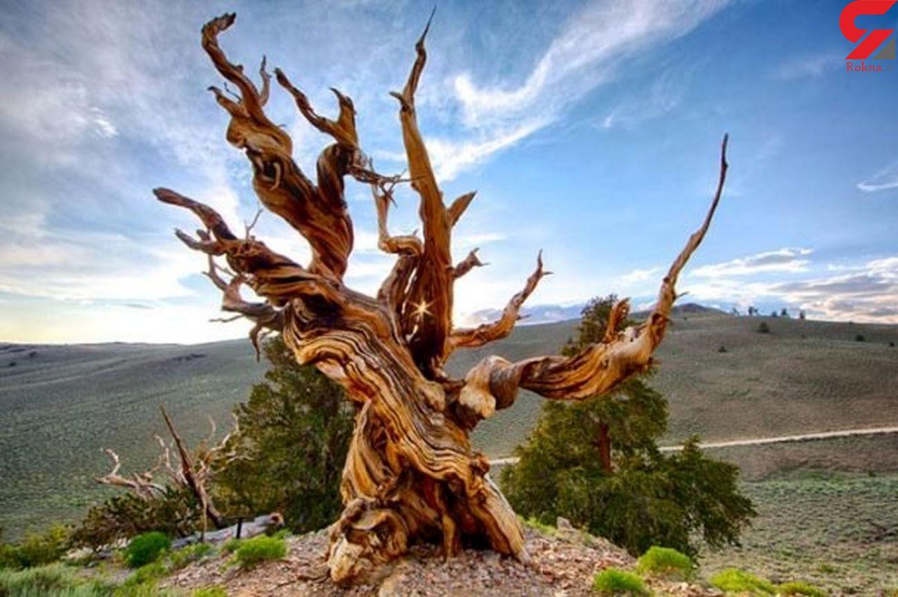 ساخت دستگاه  شناسایی درختان پوسیده