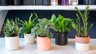 درمان بی خوابی با نگهداری گیاهان در اتاق خواب