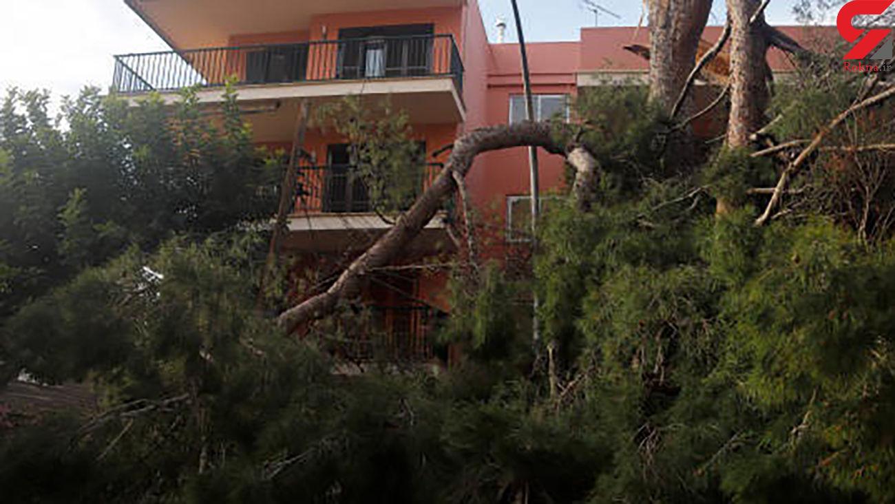 عکس / مرگ مرد نکایی زیر درخت سقوط کرده