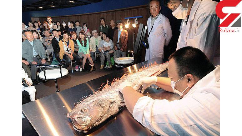 این ماهی ها هشدار و زنگ خطر فاجعه می دهند!+عکس