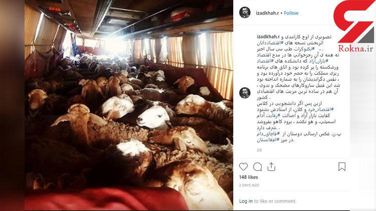 انتشار تصویری مبنی بر قاچاق گوسفند با اتوبوس در فضای مجازی+عکس