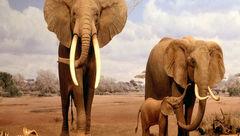 حقایق عجیب و خارق العاده درباره فیلها