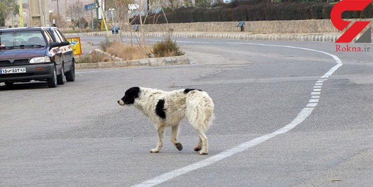 سگ های ولگردی که بلای جان مردم در شهرها شدند