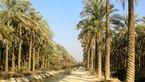 طرح نخیلات و چاه مزرعه ای دراستان بوشهراجرا می شود