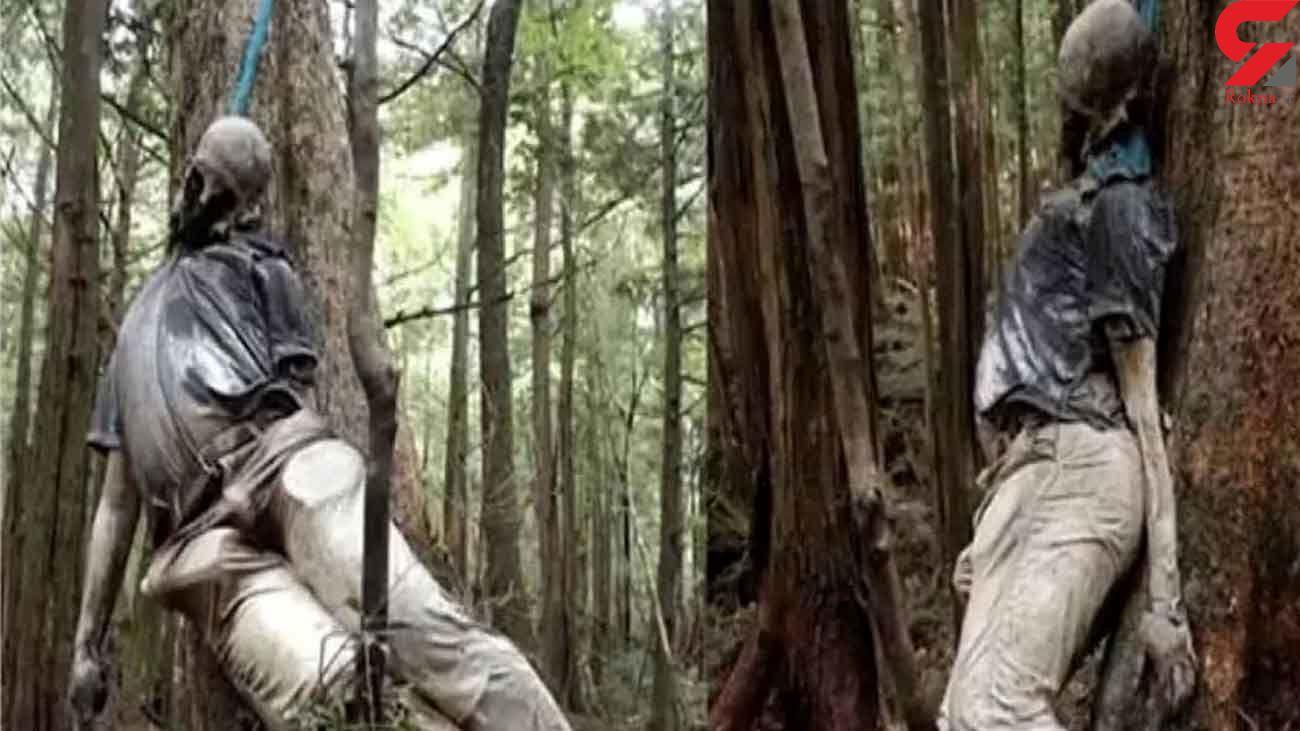 برای خودکشی به این جنگل نروید + عکس 12+