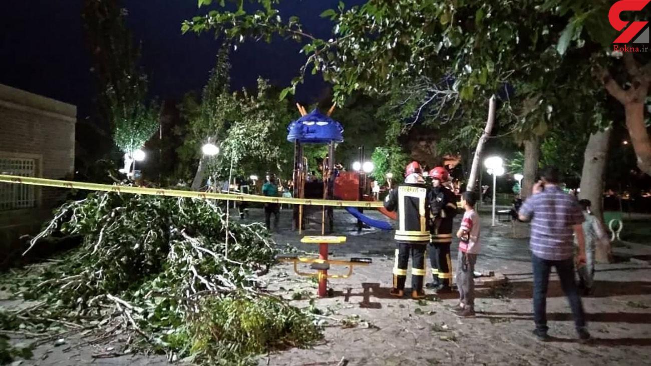 سقوط درخت روی مادر و کودک / در تربت حیدریه رخ داد + عکس