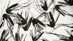 کرونا در حشرات نابود شد