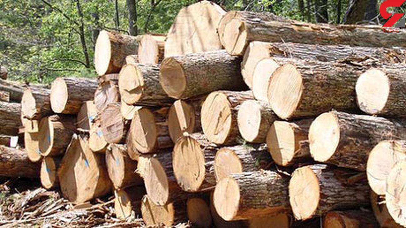کشف 13 تن چوب قاچاق در لنگرود