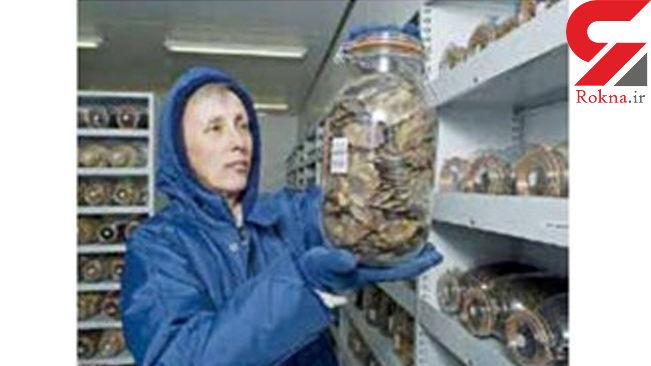 بانک گیاهان در خطر انقراض + عکس