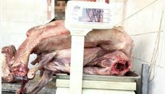 قصاب مشهدی سگ ها را سلاخی می کرد! / گوشت سگ با قیمت 36 هزارتومان + عکس وحشتناک