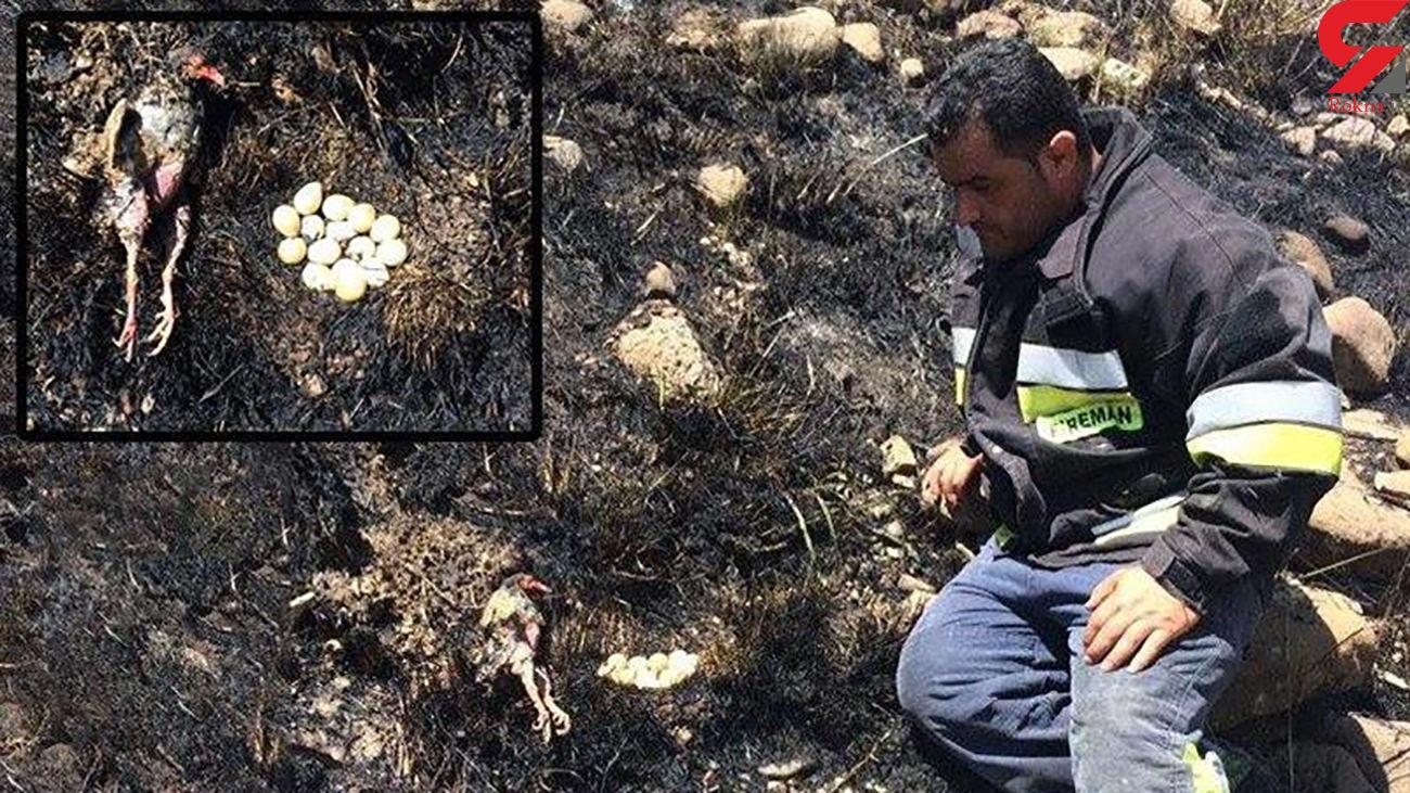 مرگ فداکارانه پرنده مادر در آتش سوزی لواسان + عکس تلخ