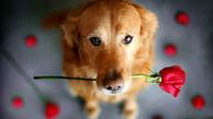 این بیماریها را سگها شناسایی میکنند