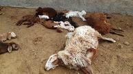 تلف شدن 49 راس احشام در شهرستان دهلران