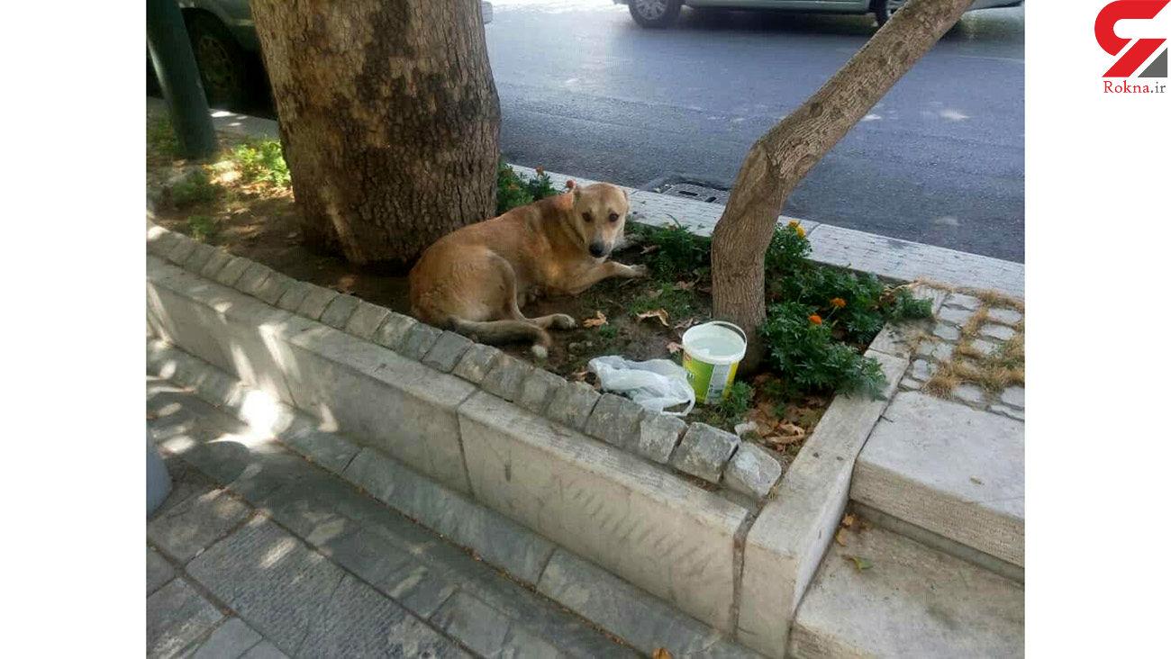 فرار دردناک یک سگ از وانت مرد مرموز در مرکز تهران + عکس های اختصاصی