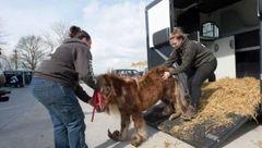 کره اسبی با پاهای شاخدار در رسانه ها جنجال به پا کرد+عکس