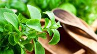سلامت کبدتان را با یک گیاه معجزه آسا بیمه کنید