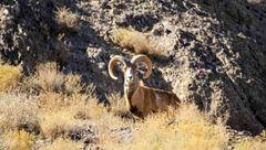 شکارچیهای منصورآباد رفسنجان حافظ حیوانات هستند!