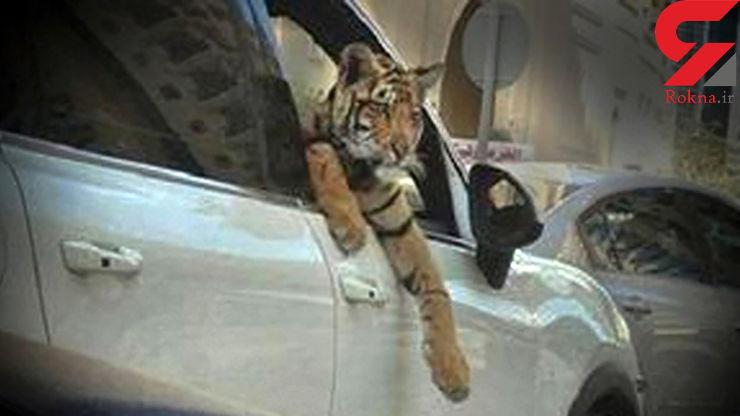 حضور حیوانات وحشتناک   در ساعات پایانی شب تهران!