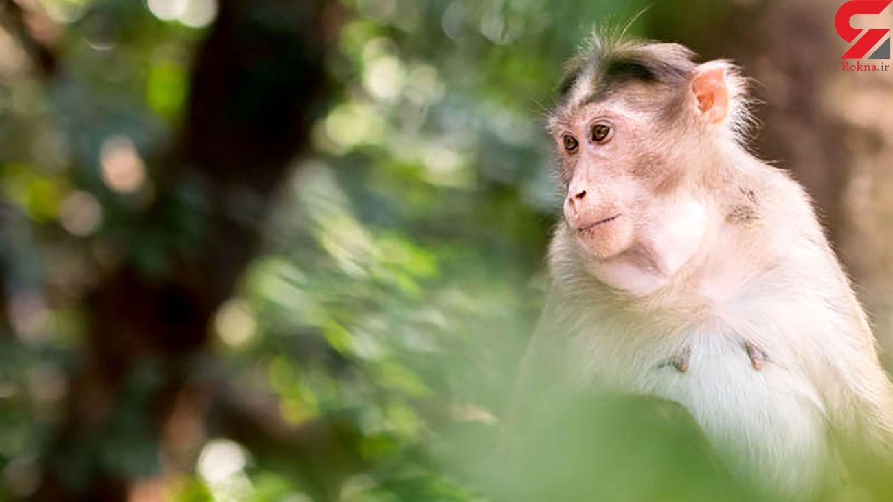 China reports first human death from Monkey B Virus. All you need to know