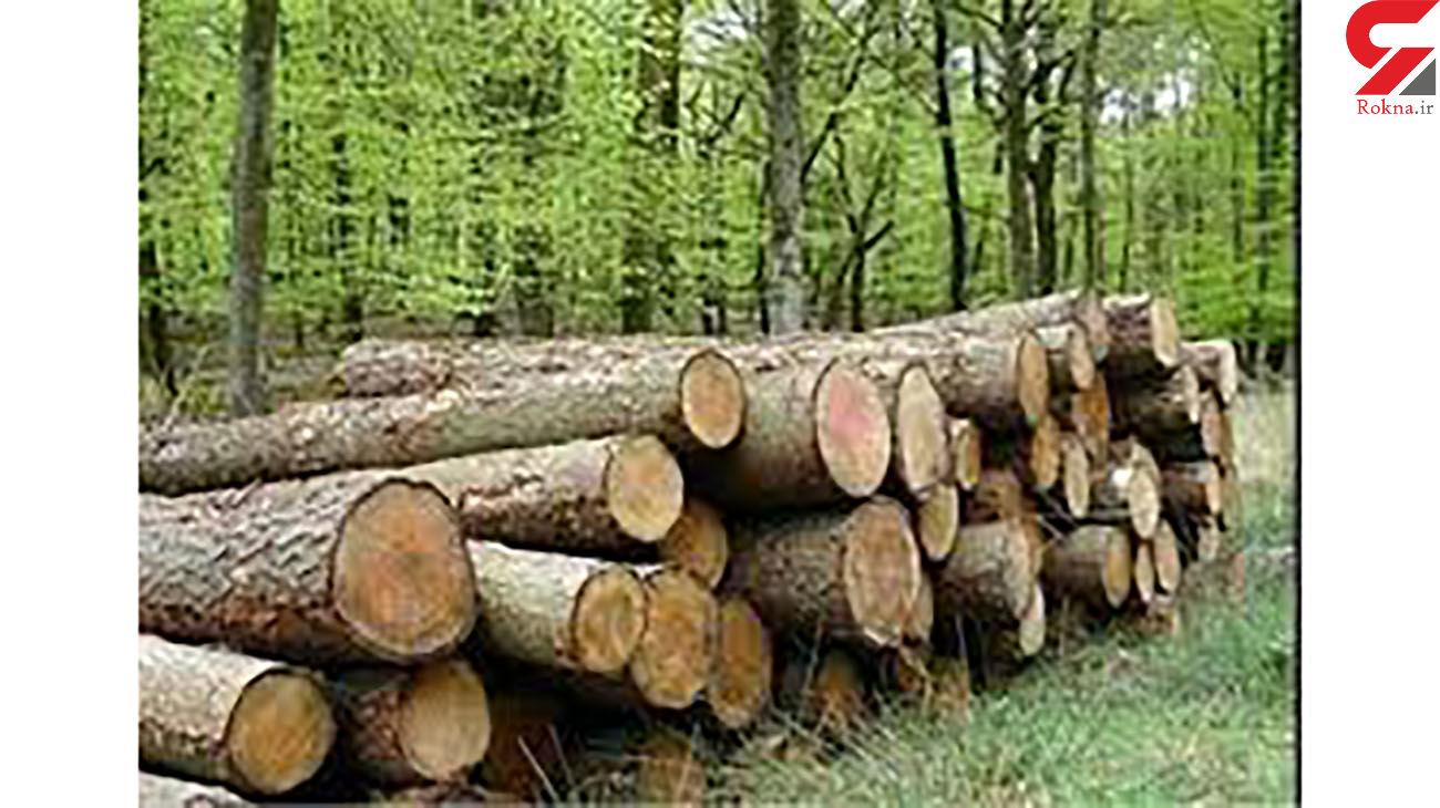 کشف 6 تن چوب قاچاق در کامیاران