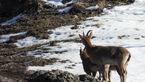 دستگیری 13 شکارچی در اصفهان