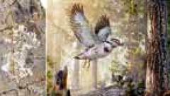 کشف فسیل پرنده 127 میلیون ساله + عکس