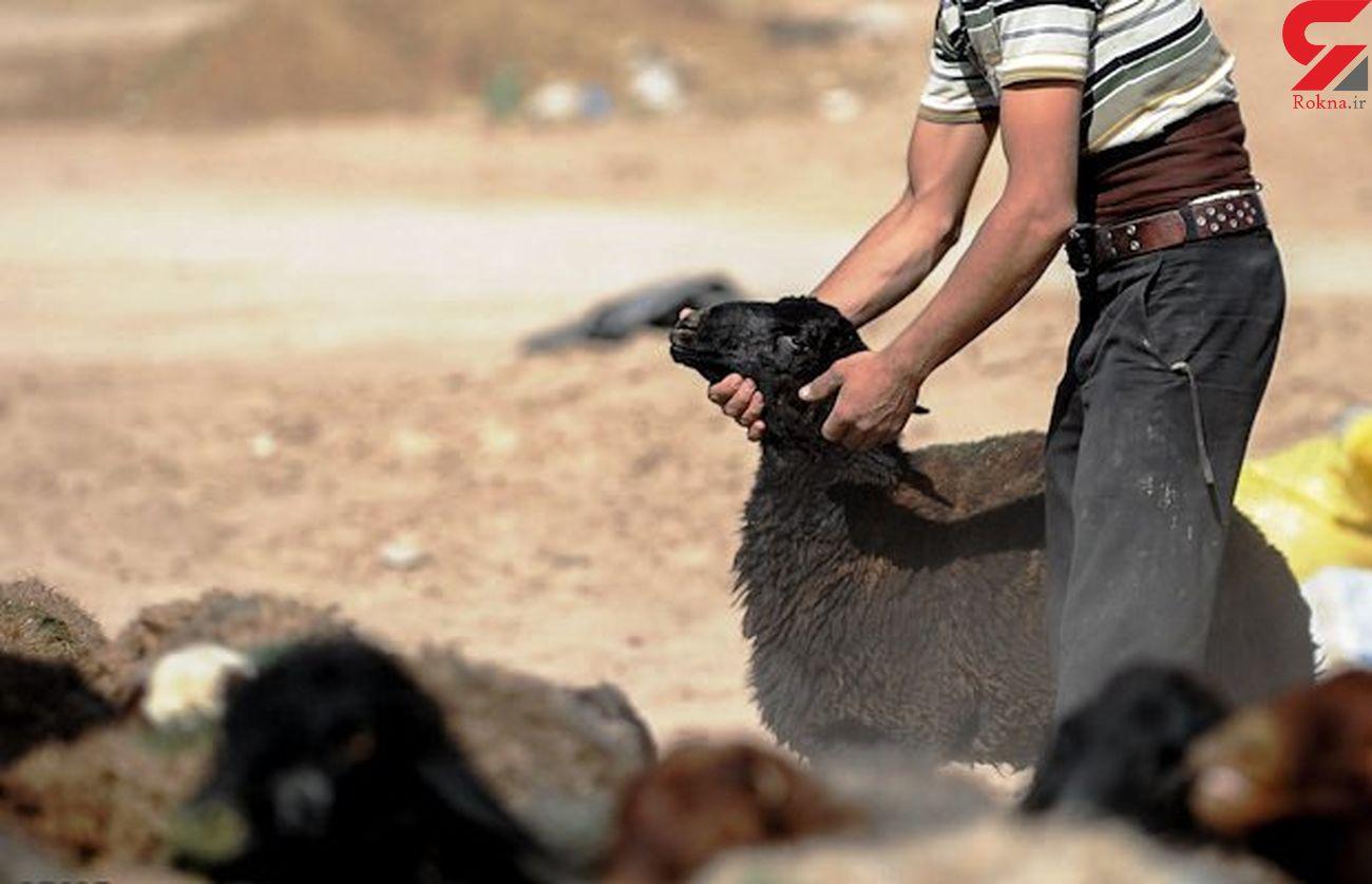 دستگیری سارق گوسفندان در خاتم